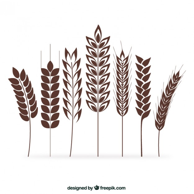 626x626 Wheat Vectors, Photos And Psd Files Free Download