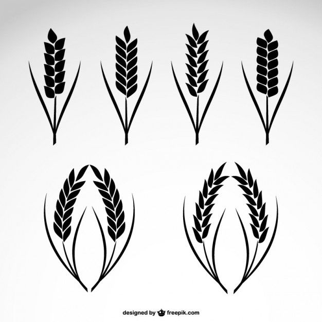 626x626 Wheat Collection Icons Vector Free Download Paper Projects