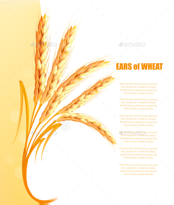 590x695 Yellow Background With Ears Of Wheat Vector By Almoond Graphicriver