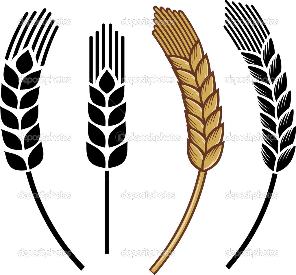 1024x951 Wheat Vector 4 An Images Hub