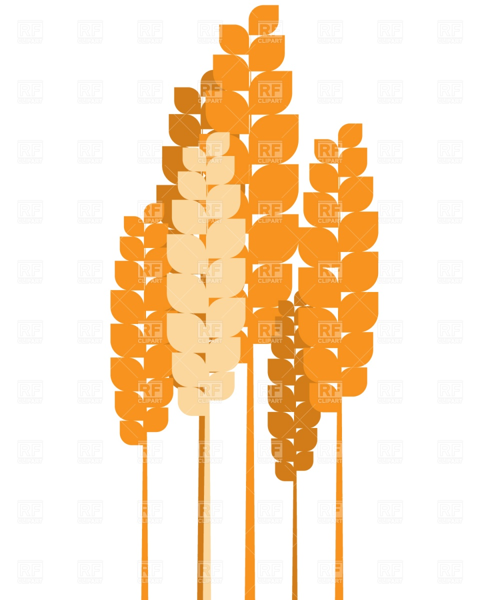 960x1200 Ears Of Wheat Vector Image Vector Artwork Of Plants And Animals
