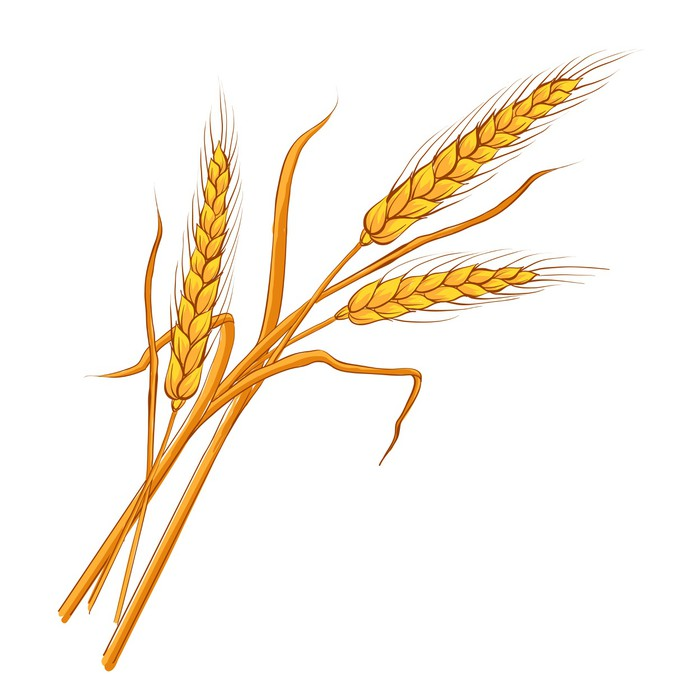 700x700 Ears Of Wheat. Vector Eps 10. Poster We Live To Change