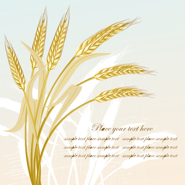 600x600 Golden Wheat Vector Free Download Eps Files