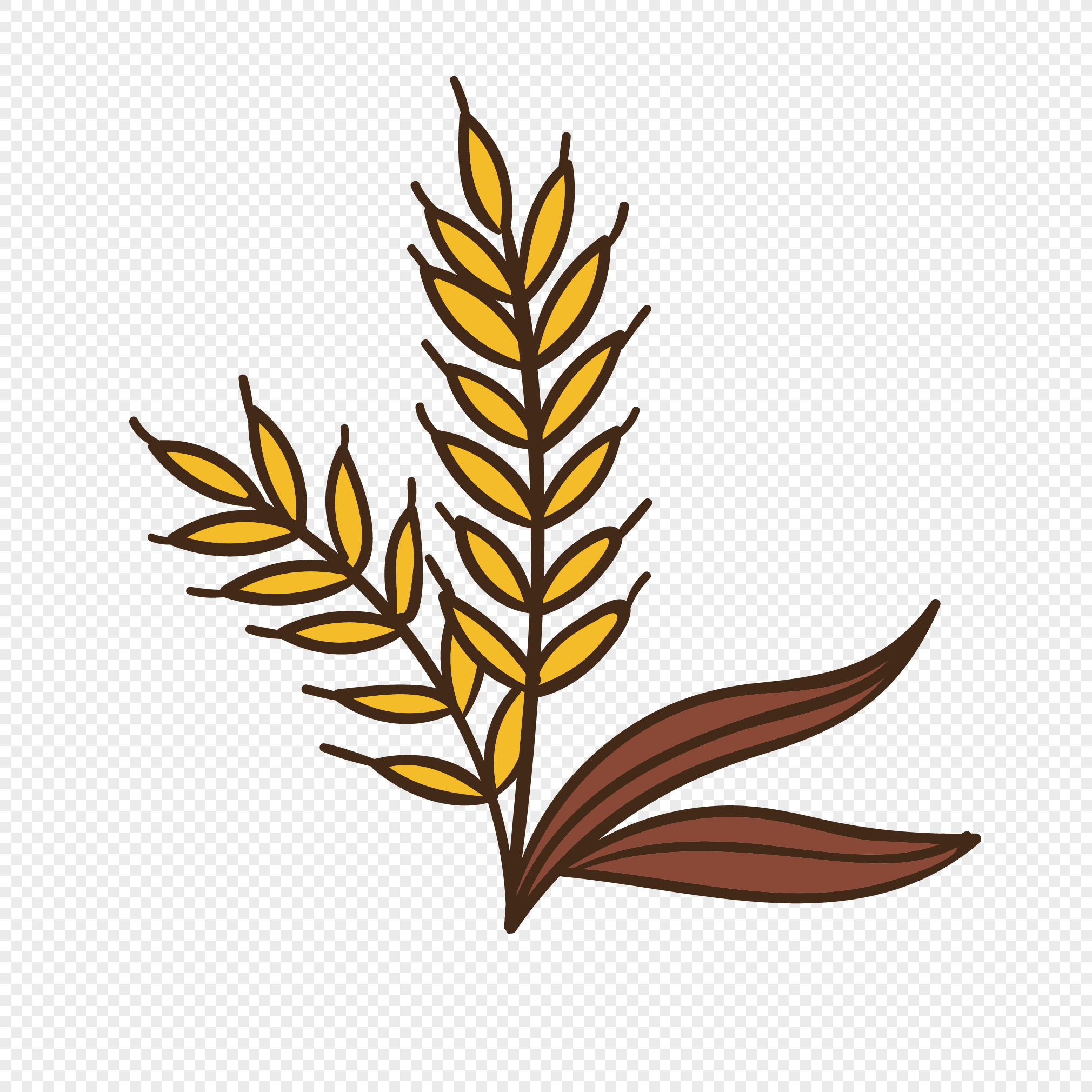 2020x2020 Golden Wheat Vector Png Image Picture Free Download