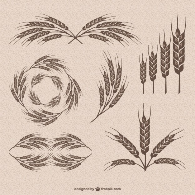 626x626 Retro Wheat Vector Collection Vector Free Vector Download In .ai