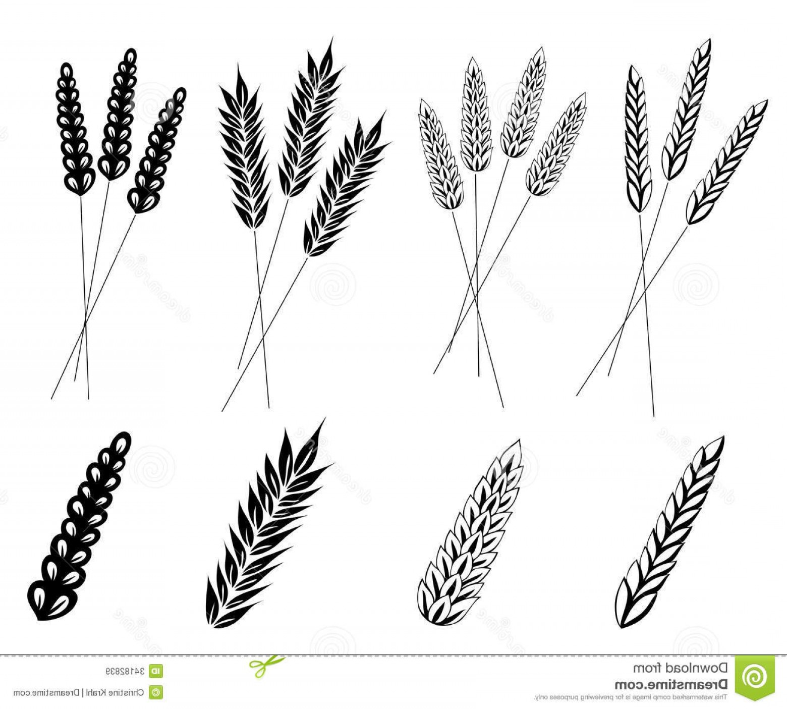 1560x1405 Royalty Free Stock Images Grain Corn Wheat Vector Set Design