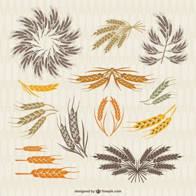 626x626 Vintage Collection Of Crown And Ears Wheat Vector Free Download