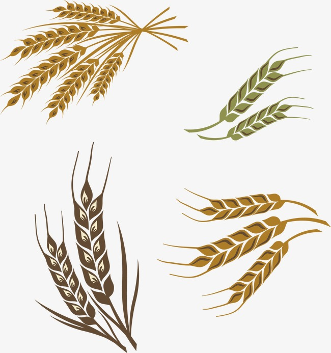 650x693 Wheat, Wheat Vector Png And Vector For Free Download