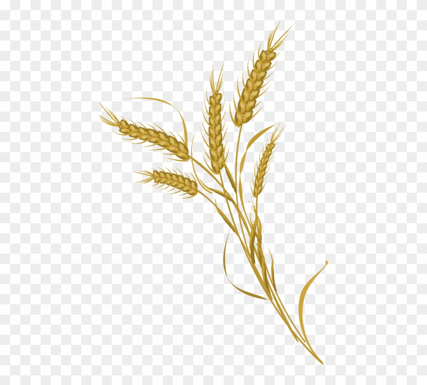 840x759 Wheat Bundle Clip Art Black And White Download