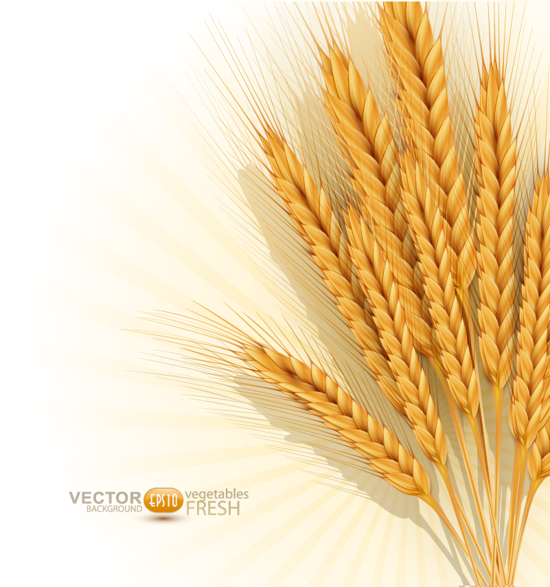 801x855 Wheat Vector Free Vector Graphic Download