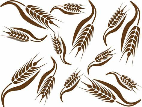 474x358 Wheat Vector Free Download. Vector Wheat Clipart Best
