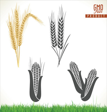 350x368 Corn And Wheat Vector Png Images, Backgrounds And Vectors For Free