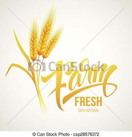 450x470 Wheat Ears Icon. Ears Of Wheat. . Vector Illustration Eps 10.