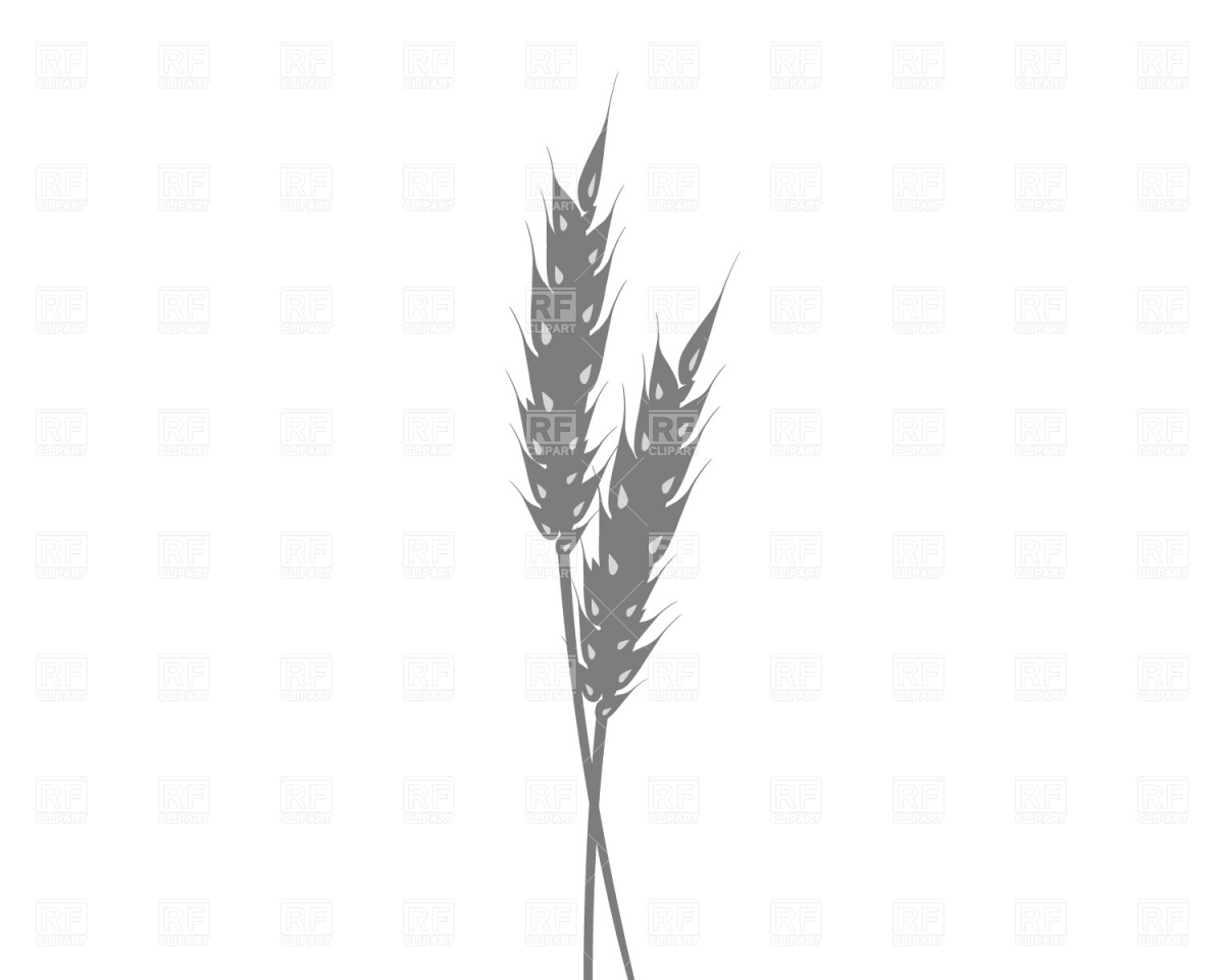 1200x960 Ear Of Wheat Free Vector Image Vector Artwork Of Food And