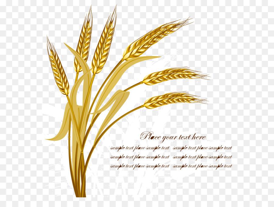 900x680 Wheat Harvest Crop