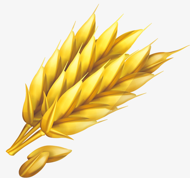 650x609 Wheat Png Vector Element, Wheat Vector, Crop, Vector Png And
