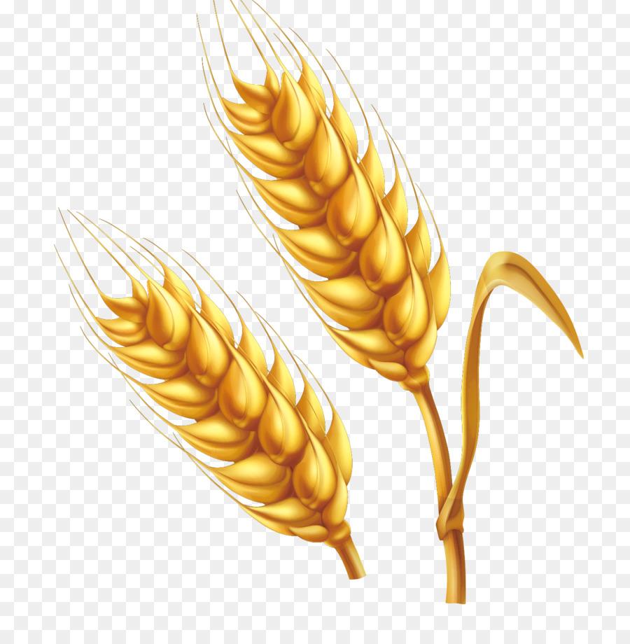 900x920 Download Wheat Cartoon Illustration Cartoon Farm Golden Wheat