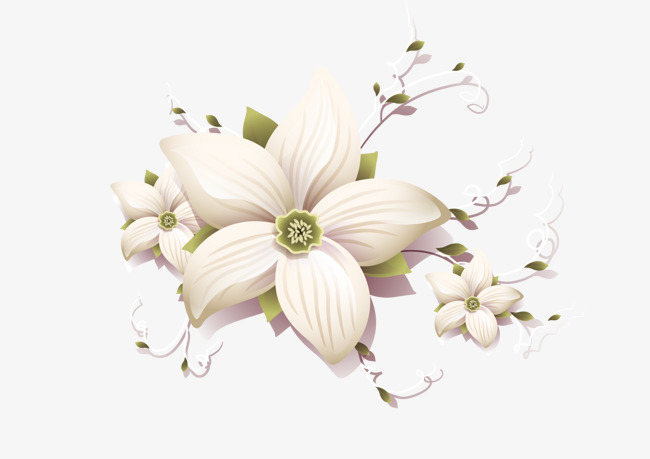 650x459 Flowers, White Flowers, Vector Flower Png And Vector For Free Download