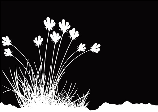 511x362 Flowers And Black And White Vector Free Vector 4vector