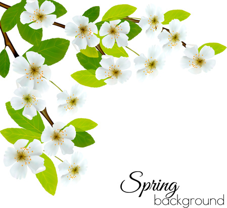 449x412 Spring Background With White Flowers Vector Free Vector In