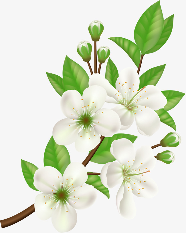 650x816 Vector Hand Painted White Flowers, Hand Vector, Vector, Hand
