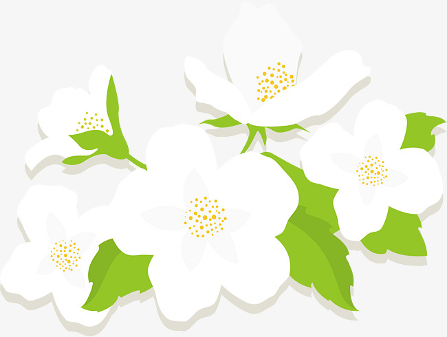 650x490 White Flowers, Vector Png, Flower, Jasmine Flower Png And Vector