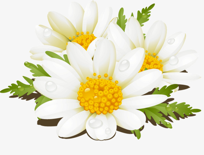 650x493 White Flowers Vector Fantasy, Flowers, White Flowers, Creative