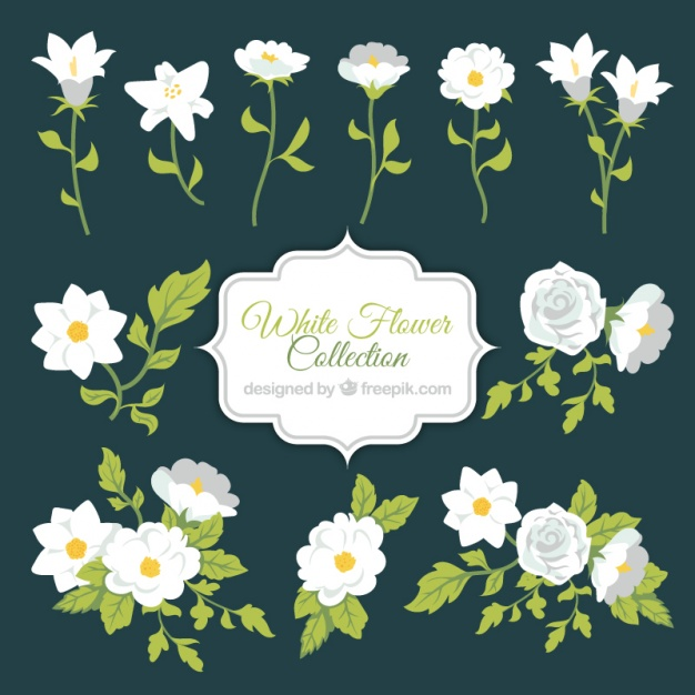 626x626 White Flower Collection Vector Free Download