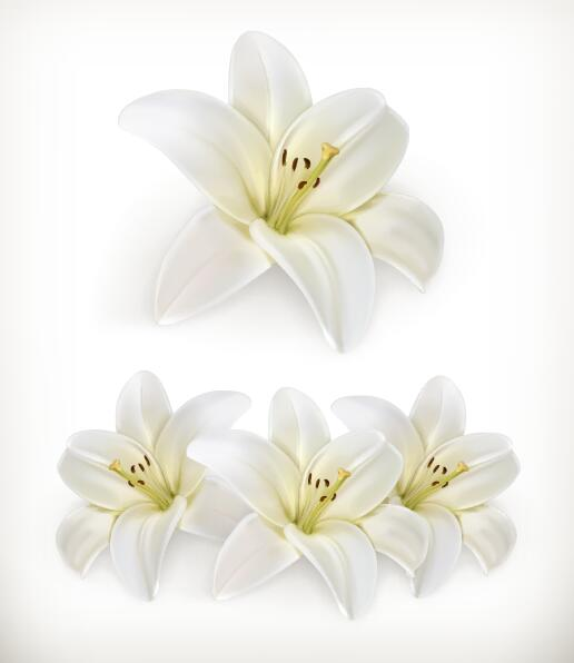 516x596 Beautiful White Flower Vector Illustration 02 Free Download