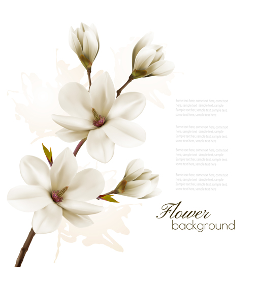 500x555 White Magnolia With Flower Background Vector 02 Free Download