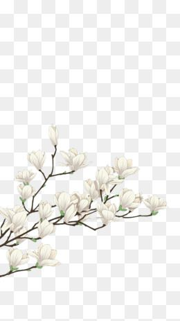 260x463 White,flowers,plant,decorative Material,decorative,material,white