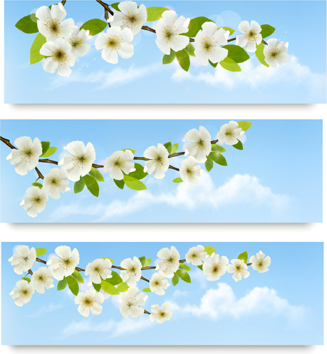 459x496 Beautiful White Flowers Vector Banner Free Vector In Encapsulated