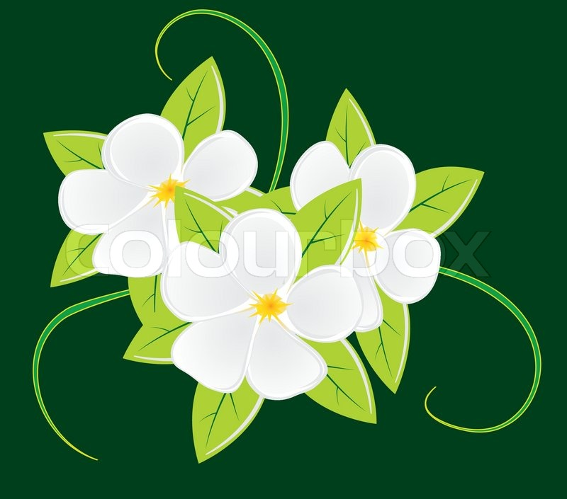800x705 Bouquet Of Three White Flowers. Vector Illustration Stock Vector