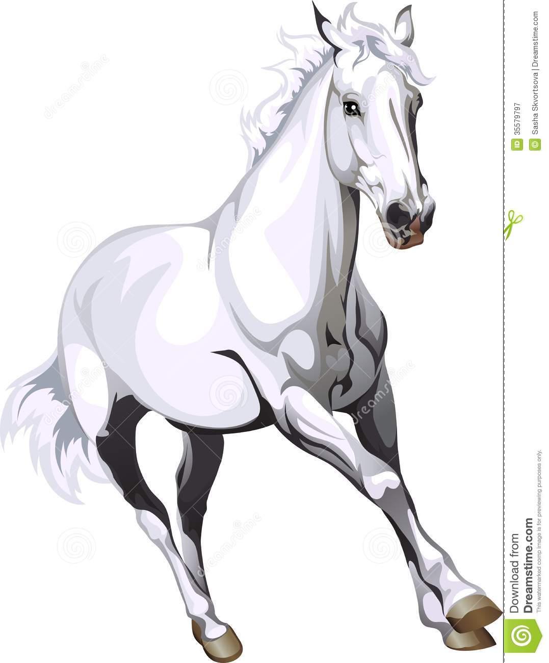 White Horse Vector