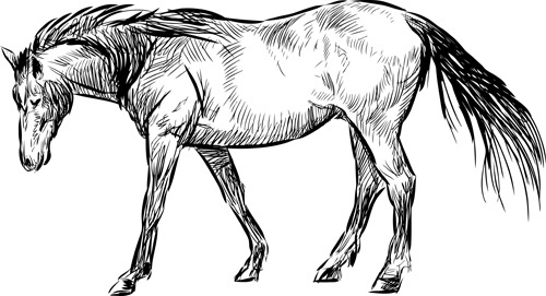 500x271 Horse Free Vector Download (798 Free Vector) For Commercial Use
