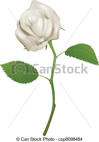 328x470 Illustration Of A Beautiful White Rose. An Illustration Of A