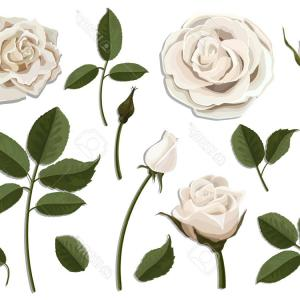 300x300 Photopink And White Vintage Roses Vector Illustration Arenawp