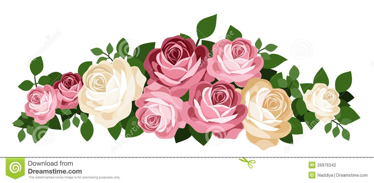 1300x636 Pink And White Roses. Vector Illustration. Stock Photography