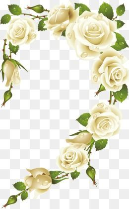 260x420 Rose,lover,white Rose,floral Elements,flower,white Vector,rose