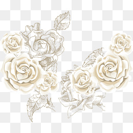 260x260 White Rose Png, Vectors, Psd, And Clipart For Free Download Pngtree