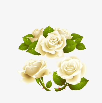 411x416 White Roses, Rose, Leaves, Vector White Roses Png And Vector For
