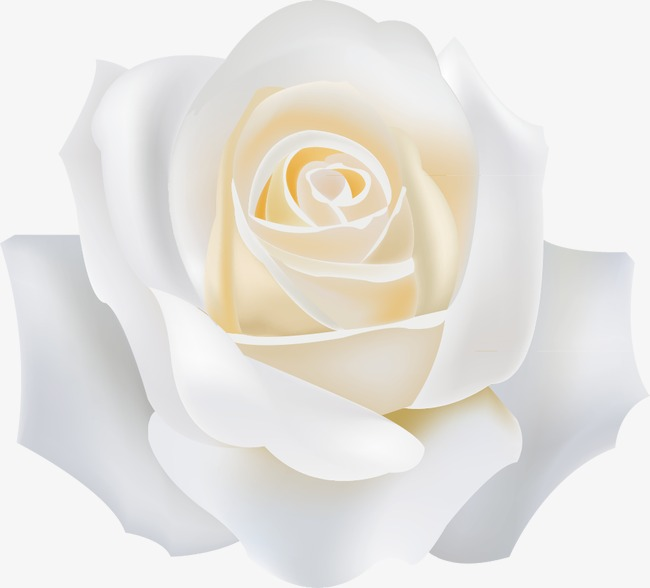 650x588 White Roses, White, Rose, White Vector Png And Vector For Free