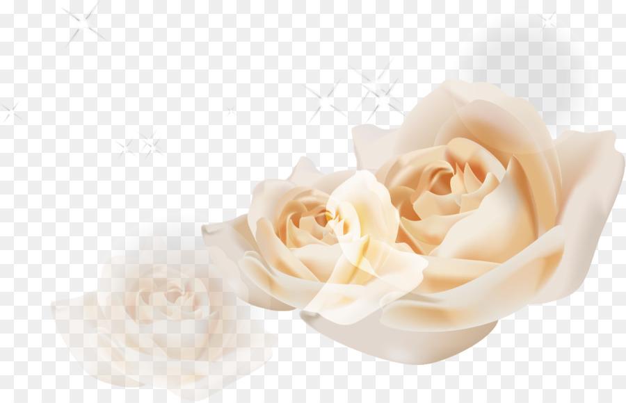 900x580 Beach Rose Garden Roses Euclidean Vector White