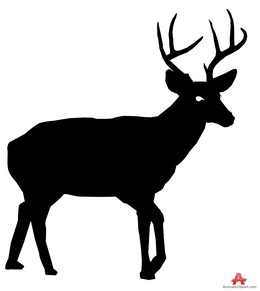 260x291 Download Deer Vector Clipart Red Deer White Tailed Deer