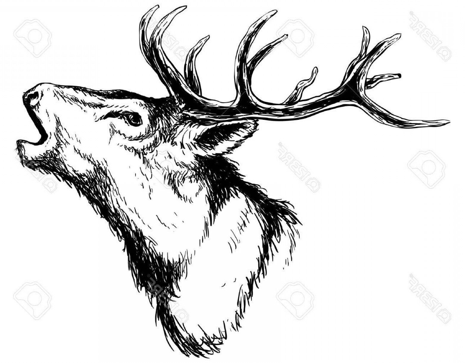 1560x1218 Photostock Vector Hand Drawn Image Of Big White Tail Buck Head
