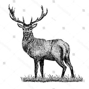 300x300 Unique Whitetail Deer Illustration Vector Photos Shopatcloth