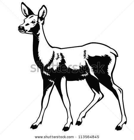 450x470 White Tailed Deer Clipart Mouse Deer