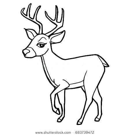 450x470 Whitetail Deer Coloring Pages Deer Coloring