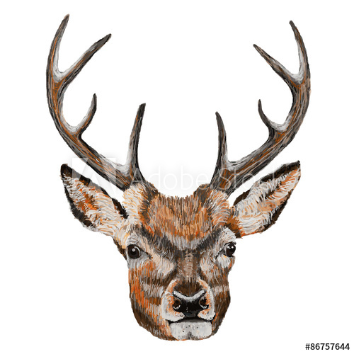 500x500 Whitetail Deer Head. Vector Illustration Of A Whitetail Deer Head