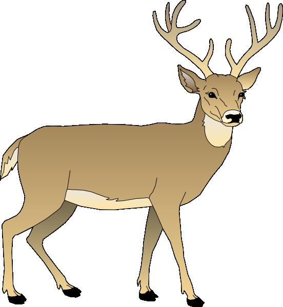 552x599 Whitetail Deer Clip Art Male Deer Clip Art